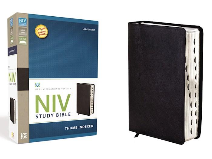 NIV Study Bible/Large Print-Black Bonded Leather Indexed   SHOPtheWORD
